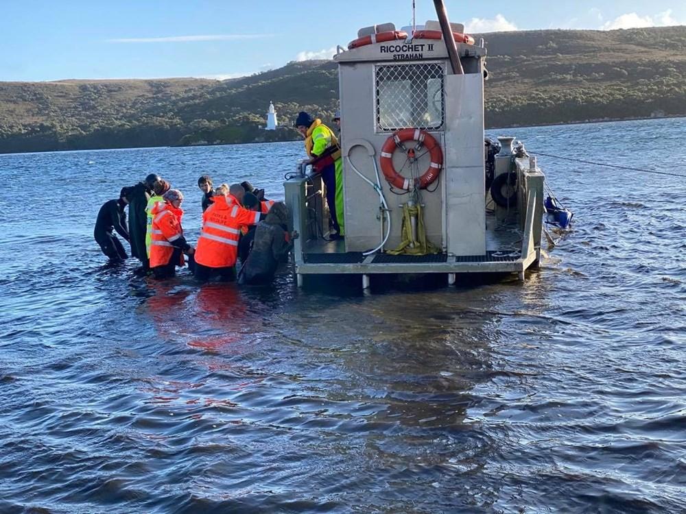Avustralya'da sığ sularda mahsur kalan balinalardan en az 90'ı öldü - 2