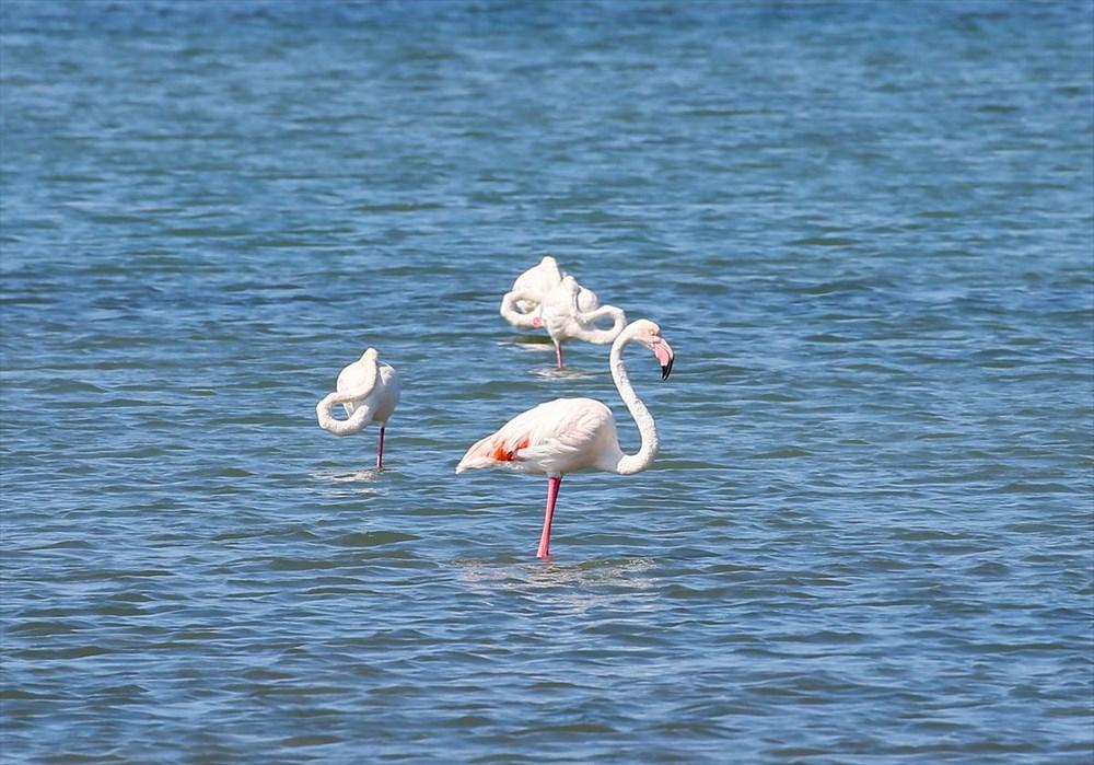 İzmir Kuş Cenneti'nde 18 bini aşkın yavru flamingo kreşte uçma hazırlığı yapıyor - 18