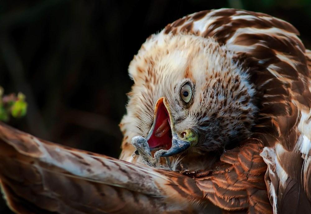 Fotoğraf tutkunu cumhuriyet savcısı 358'inci kuş türünü belgeledi - 3