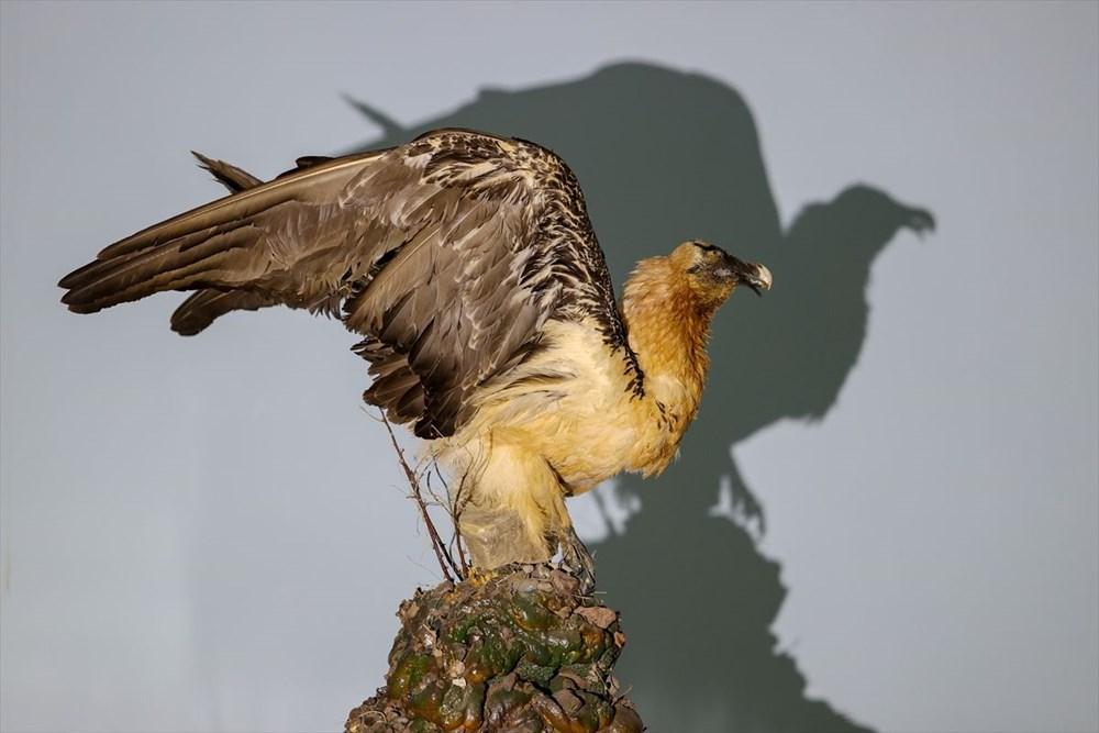 Van'da yaban hayvanları tahnit sanatıyla müzede tanıtılacak - 36