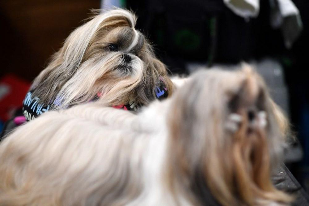 Köpek adları da corona virüsten etkilendi - 1