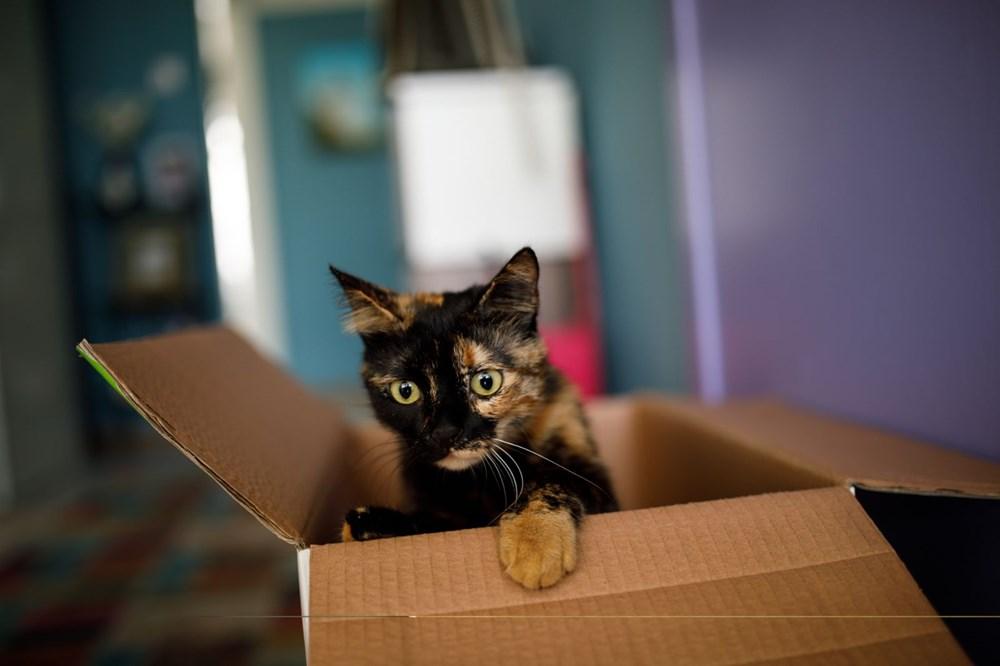 Avrupa kedi sahipliği oranı belli oldu: Türkiye'nin yüzde 19'u kedi sahibi - 5