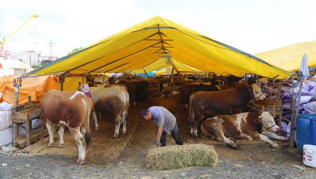 Kurban pazarındaki hayvanların yüzde 80'i satıldı