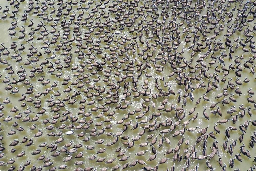 İzmir Kuş Cenneti'nde 18 bini aşkın yavru flamingo kreşte uçma hazırlığı yapıyor - 15