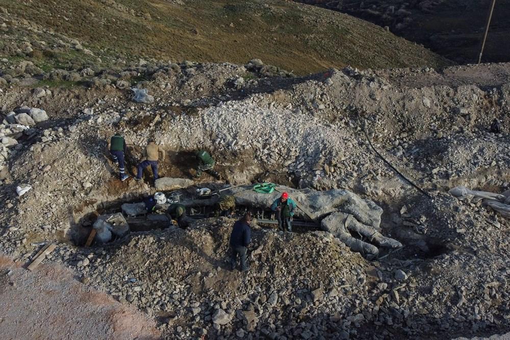 Yunanistan'da 20 milyon yıllık taşlaşmış ağaç bulundu - 9