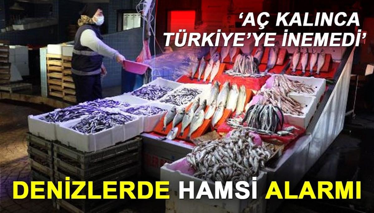 Denizlerde hamsi alarmı: 'Aç kalınca Türkiye'ye inemedi'