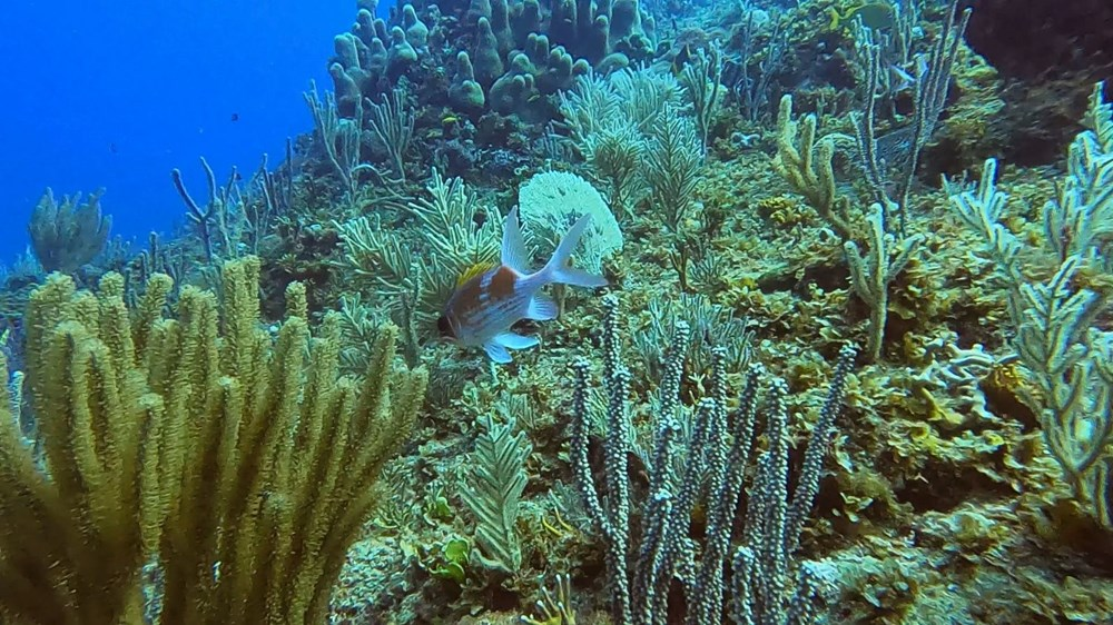 İklim değişikliği nedeniyle denizlerde yaşayan türlerin sayısı yarı yarıya düştü - 2