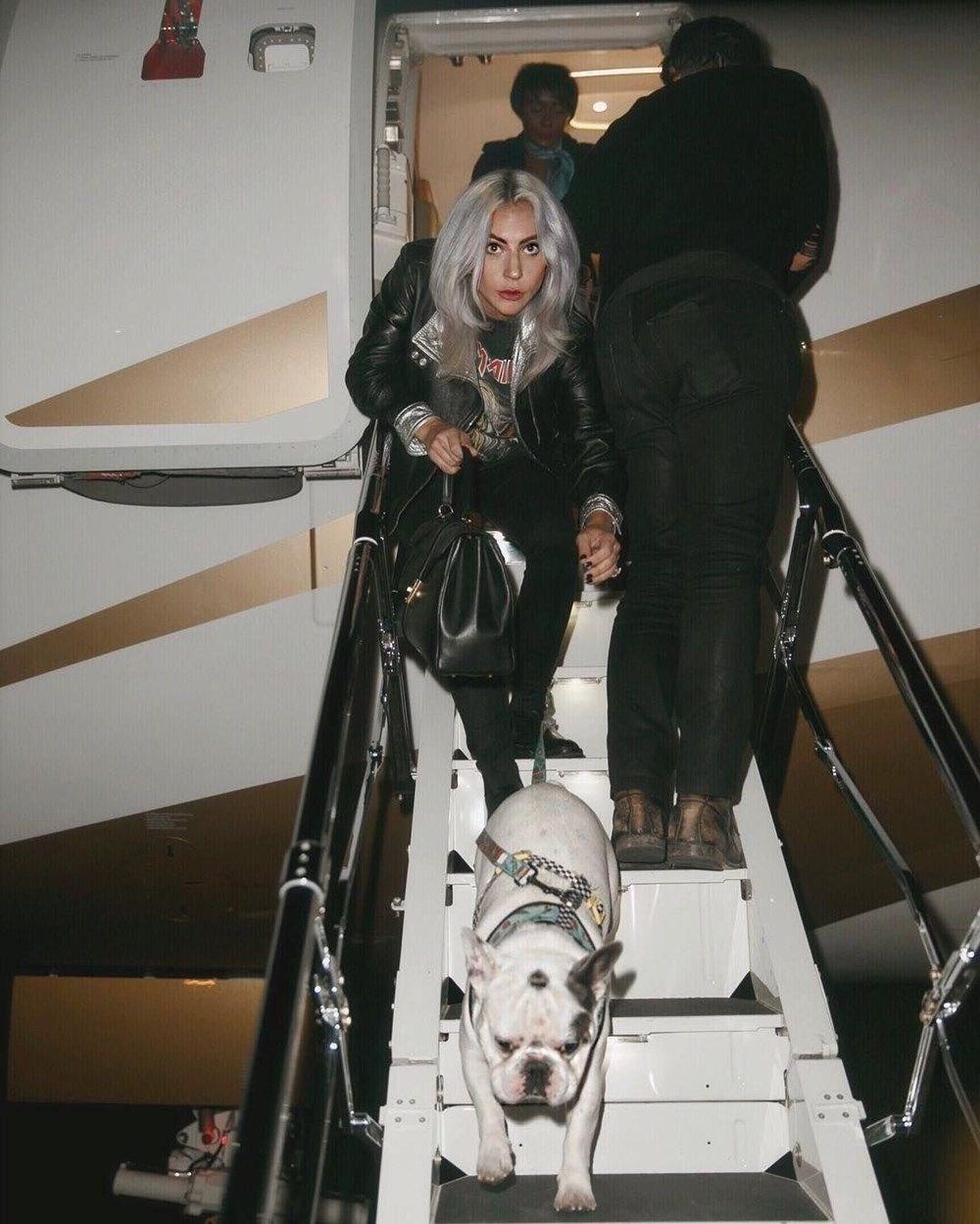 Lady Gaga'nın köpeklerini teslim eden kadın tutuklandı - 4