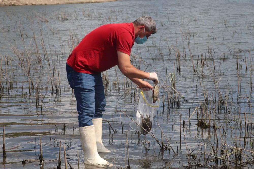 Alibeyköy Barajı'nda balık ölümleri: İnceleme başlatıldı - 10