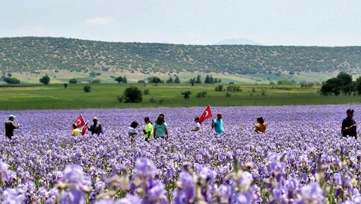 Isparta'daki zambak tarlaları turistlerin ilgi odağı