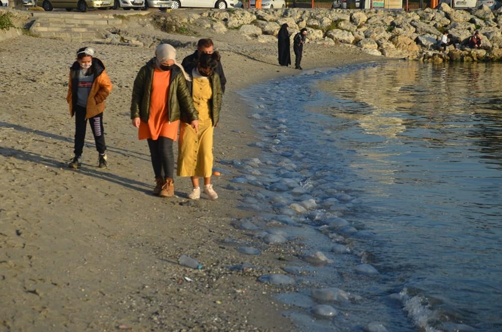 İstanbul'da korkutan dev denizanaları: Her biri en az bir kilo ağırlığında - 4