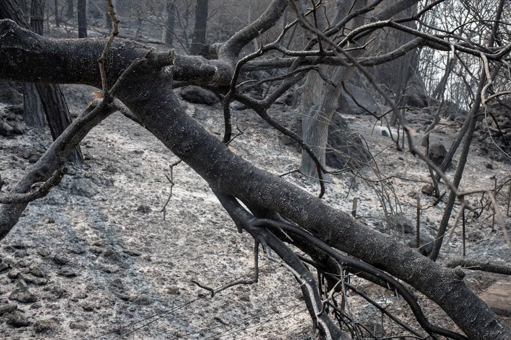 California'da 8 bin kilometrekare alan yandı, rekor kırıldı - 15