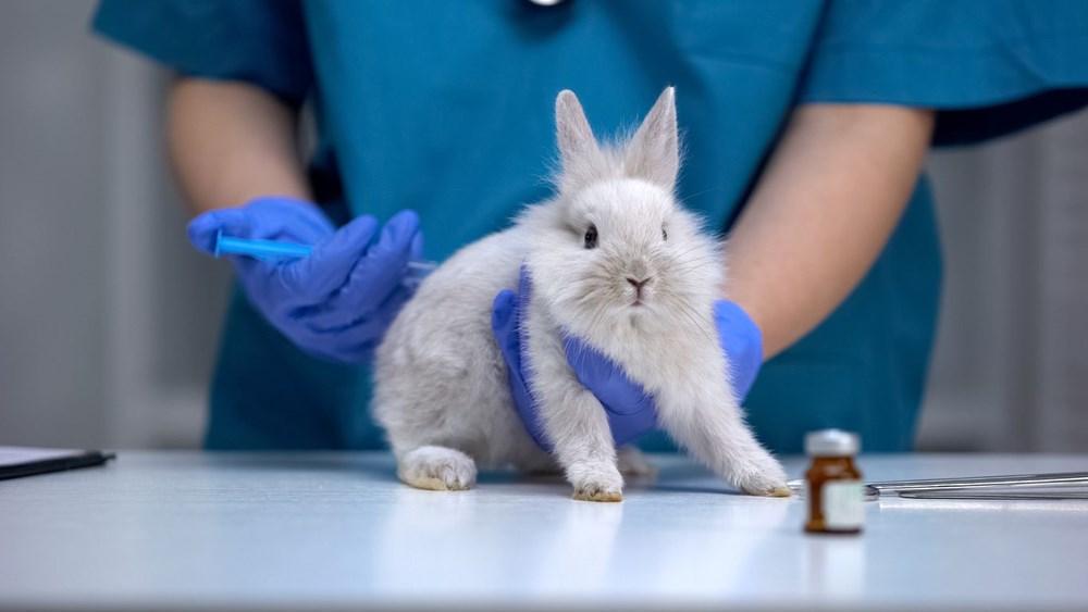 4 Ekim Dünya Hayvanları Koruma Günü hakkında her şey - 12