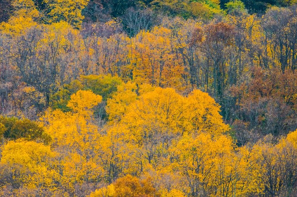 Yaban hayatı, sonbahar renklerinde görüntülendi - 6