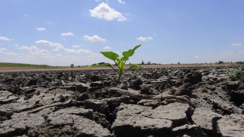 Trakya'da son 91 yılın en kurak dönemi - 1