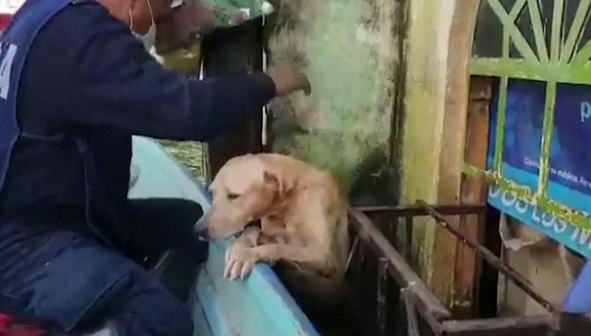 Meksika donanması köpeği selden kurtardı
