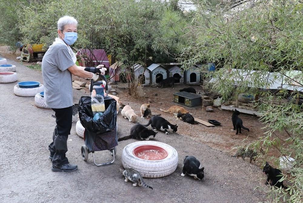 Her gün 200 sokak kedisini elleriyle besliyor - 9