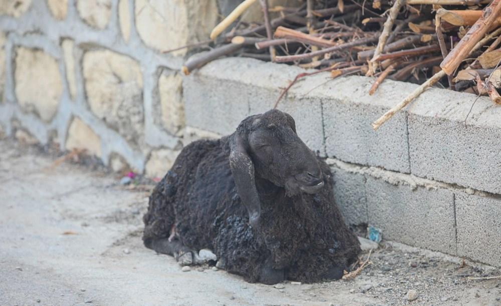 Manavgat'taki yangın evleri kül etti - 5