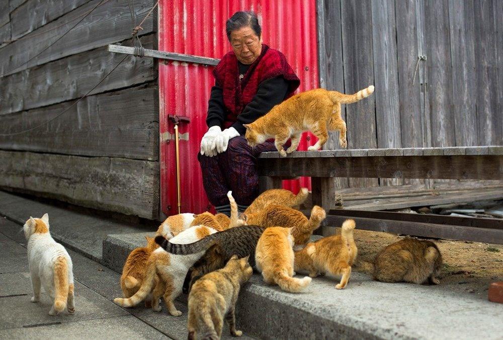 Japonya'daki kedi adası: Aoshima - 6