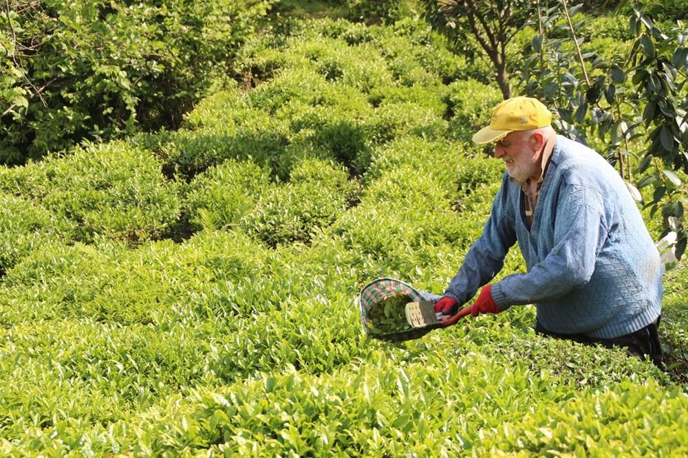 Çay göçü ile Rize'ye giden 30 bin kişiye validen uyarı - 6