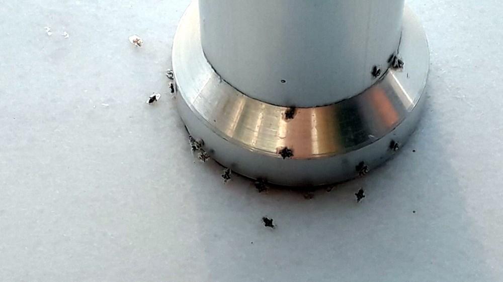 Dantel böceği 3 şehri istila etti - 10