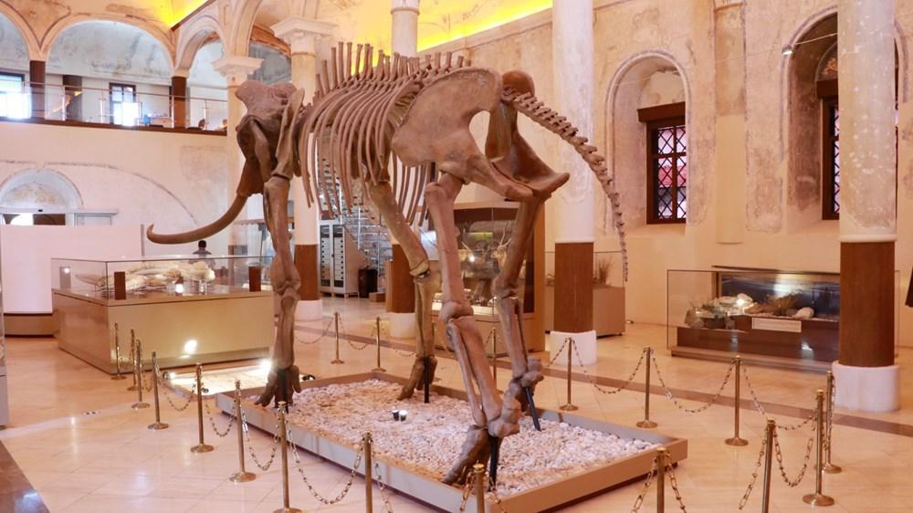 İki milyon yıllık fosiller Burdur Doğa Tarihi Müzesi'nde sergileniyor - 6