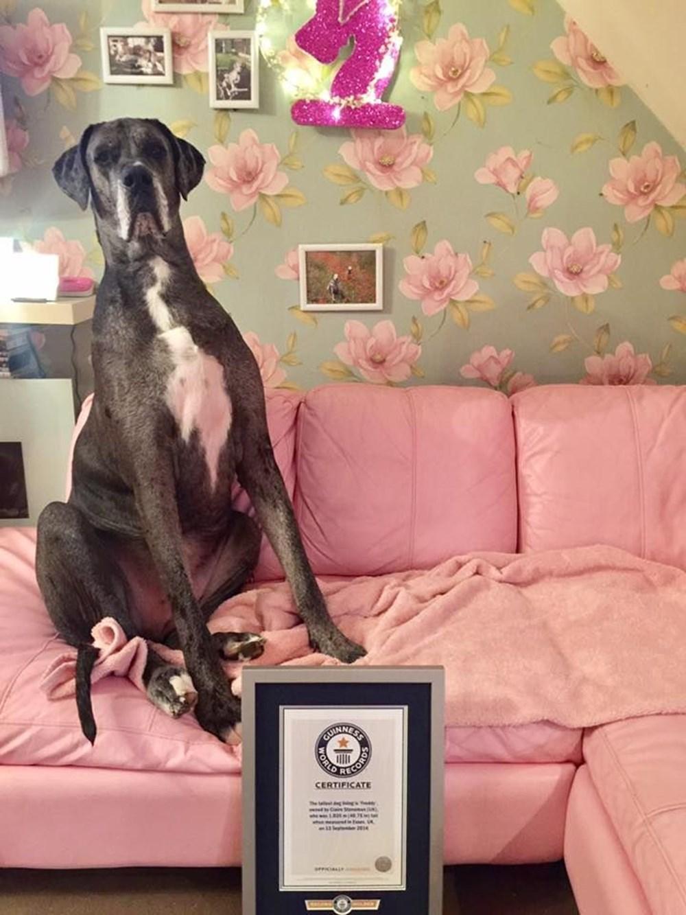 Dünyanın en uzun köpeği Freddy hayatını kaybetti - 10