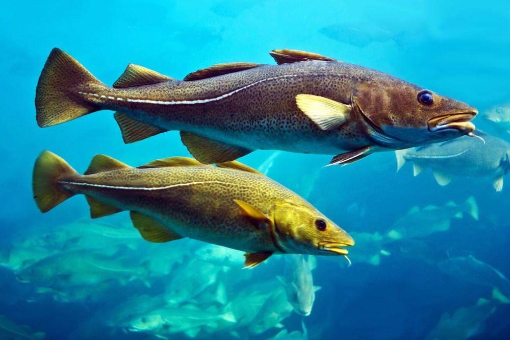 Atlas Okyanusu'nun derinliklerinde 12 yeni tür keşfedildi - 5