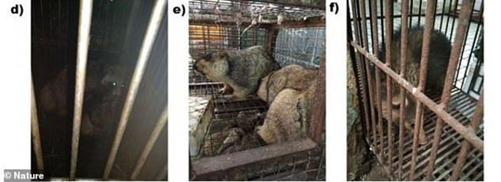 Research unpublished for 1 year: Animals known to carry Covid-19 in Wuhan have been sold for years - 8