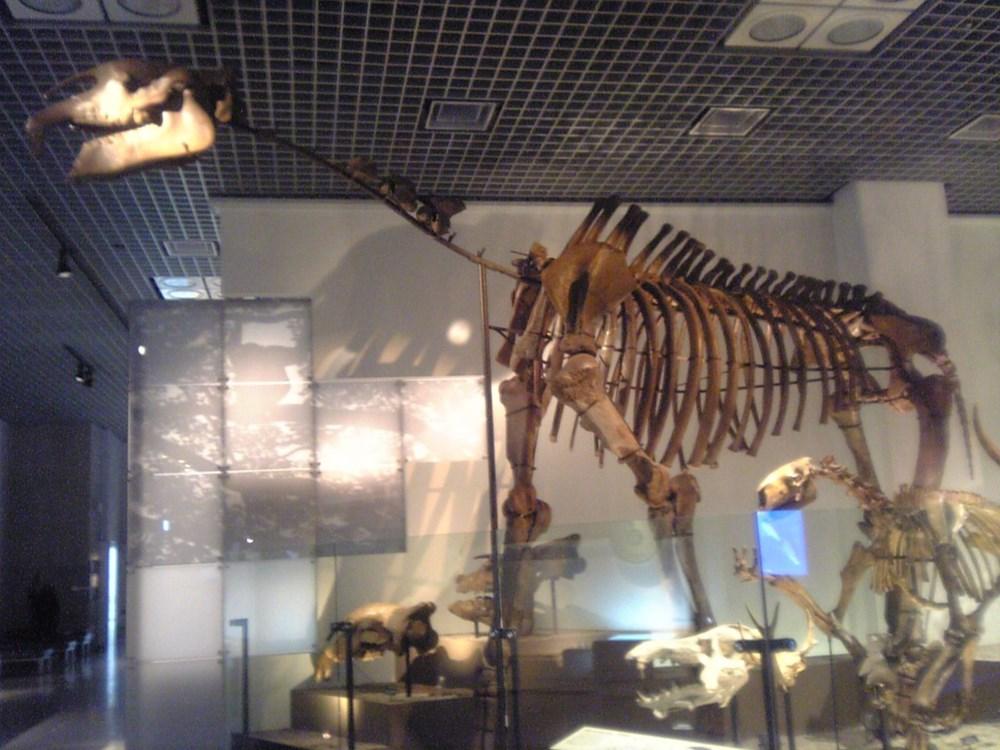 Çin'de 4 fil ağırlığında ve 7 metre uzunluğunda yeni bir gergedan türü keşfedildi - 2