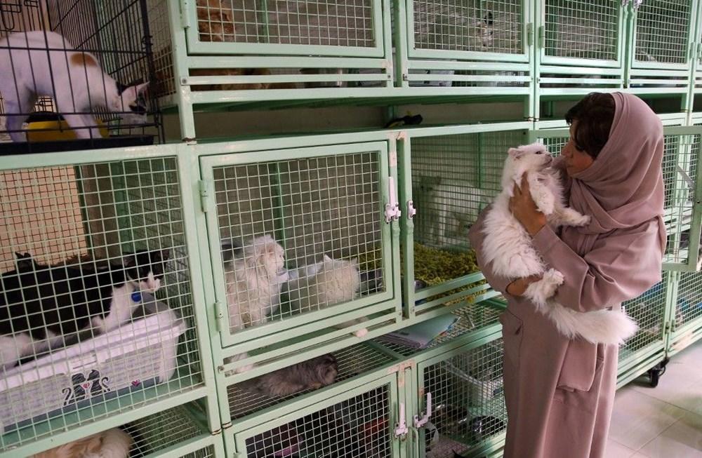 Evinde 480 kedi ve 12 köpeğe bakıyor - 7