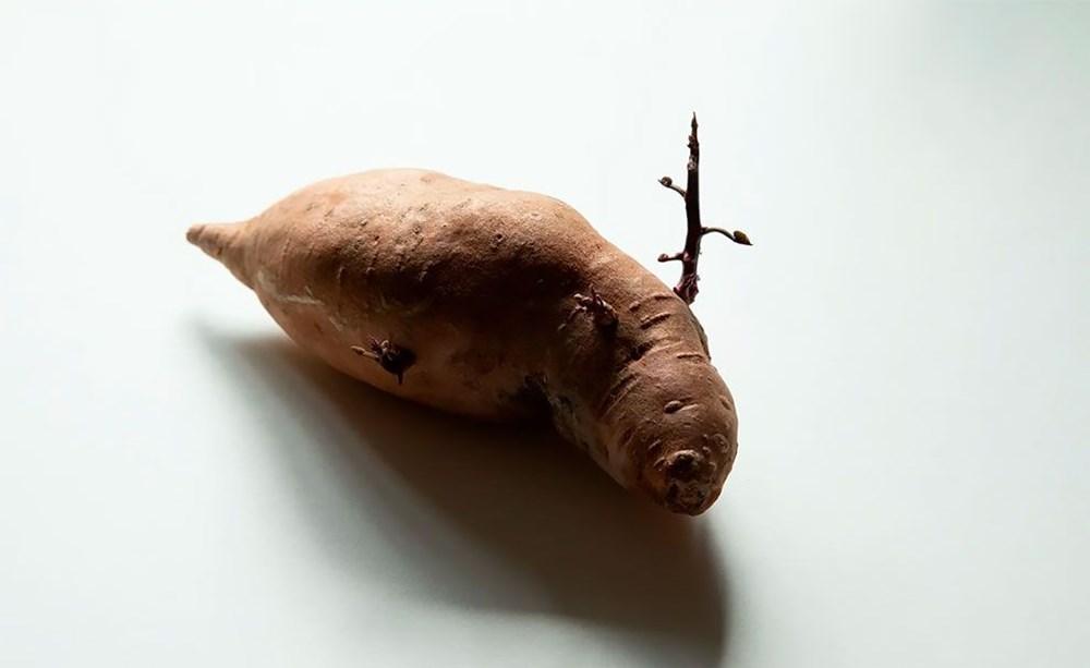 Patates Fotoğrafları Yarışması'nın kazananları belli oldu - 5