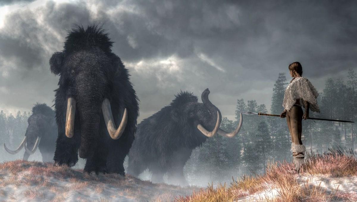 10 bin yıl önce yok olan yünlü mamutlar yeniden doğacak