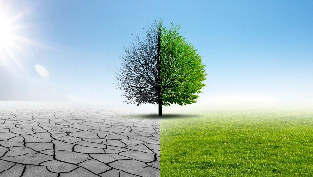 Kuraklık tehlikesi kapıda: Ağaç sayısını yüzde 20 artırmak, yağışlarda yüksek bir artış sağlayabilir