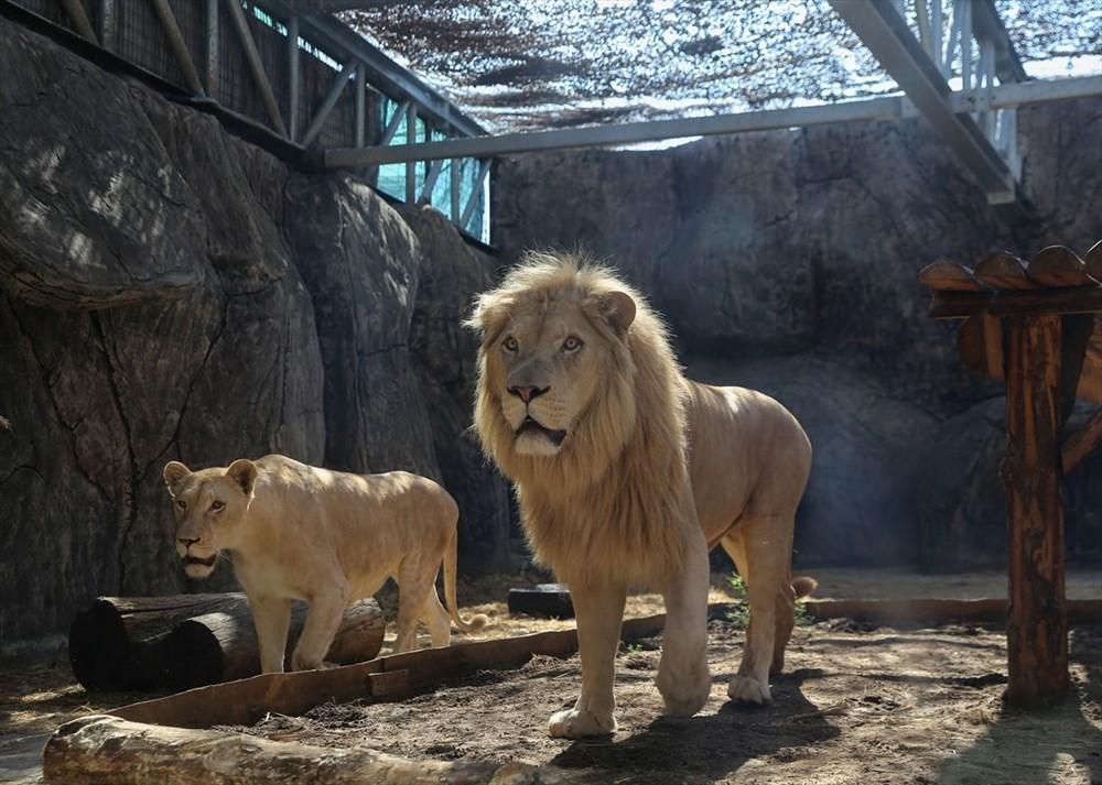 Türkiye'nin yavru aslan ve kaplanları Afrika yolcusu - 7