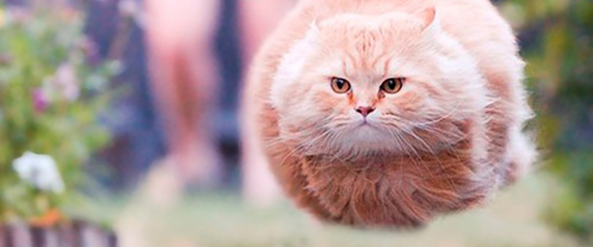 Mükemmel zamanlamayla çekilmiş kedi fotoğrafları