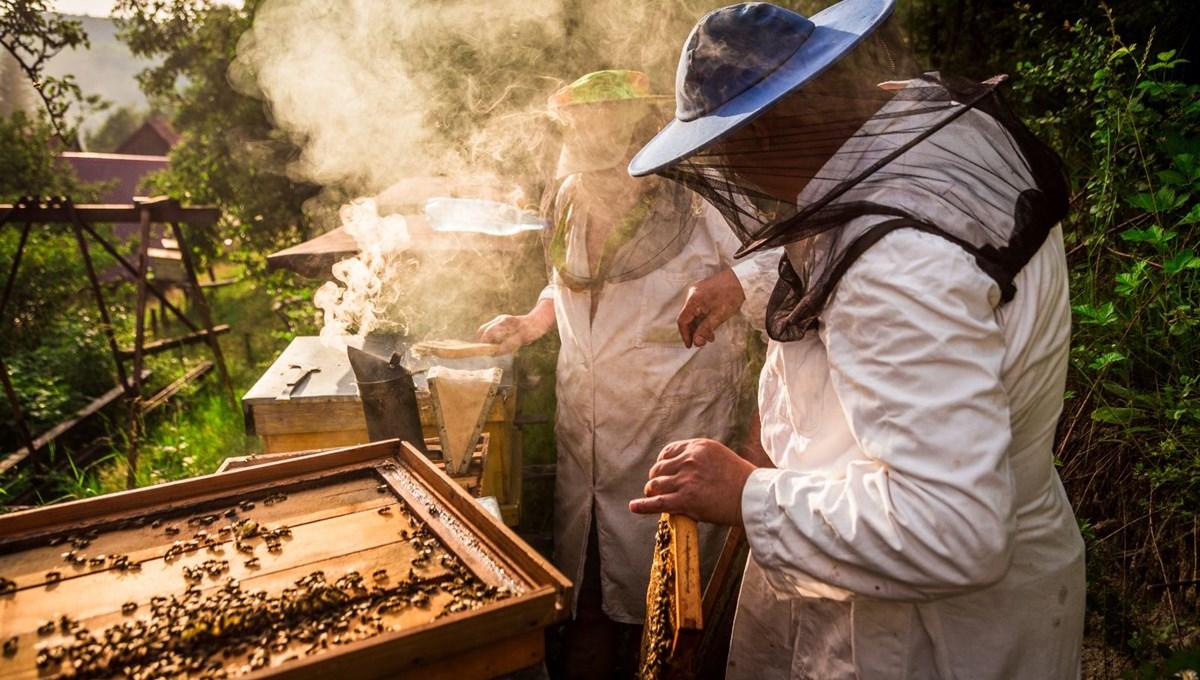 20 Mayıs Dünya Arı Günü: Arıların nüfusu azalıyor