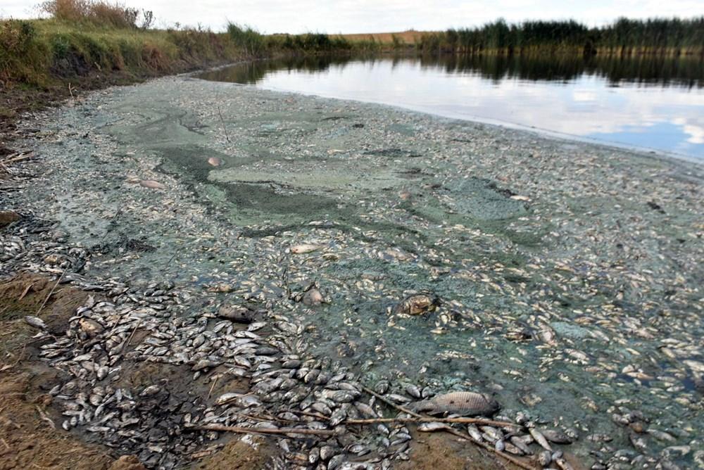 Gölette binlerce balık öldü: Kirleten işletmeye 96 bin lira ceza kesildi - 9