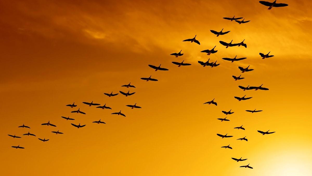 Dünyada kaç kuş yaşıyor? (İlginç bilgiler)