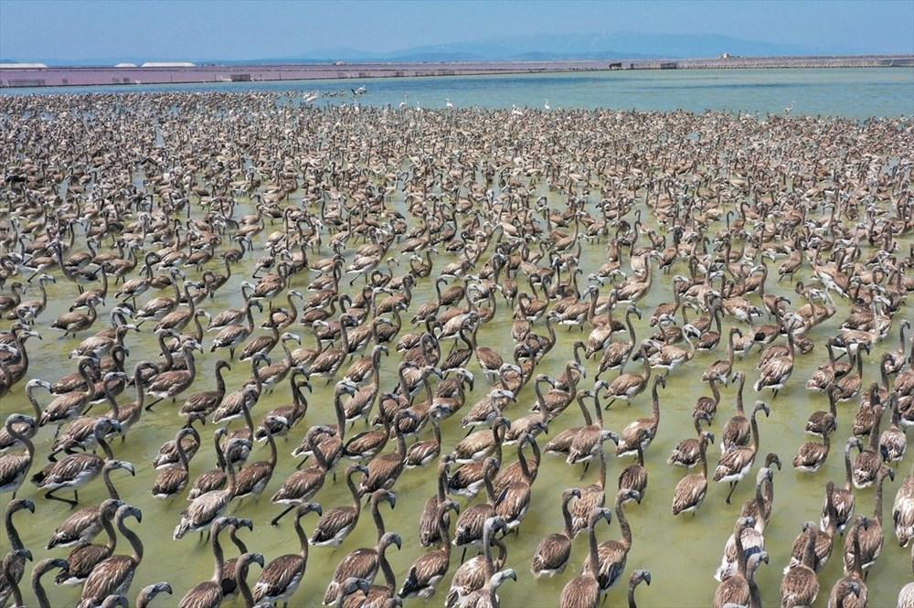 İzmir Kuş Cenneti'nde 18 bini aşkın yavru flamingo kreşte uçma hazırlığı yapıyor - 26