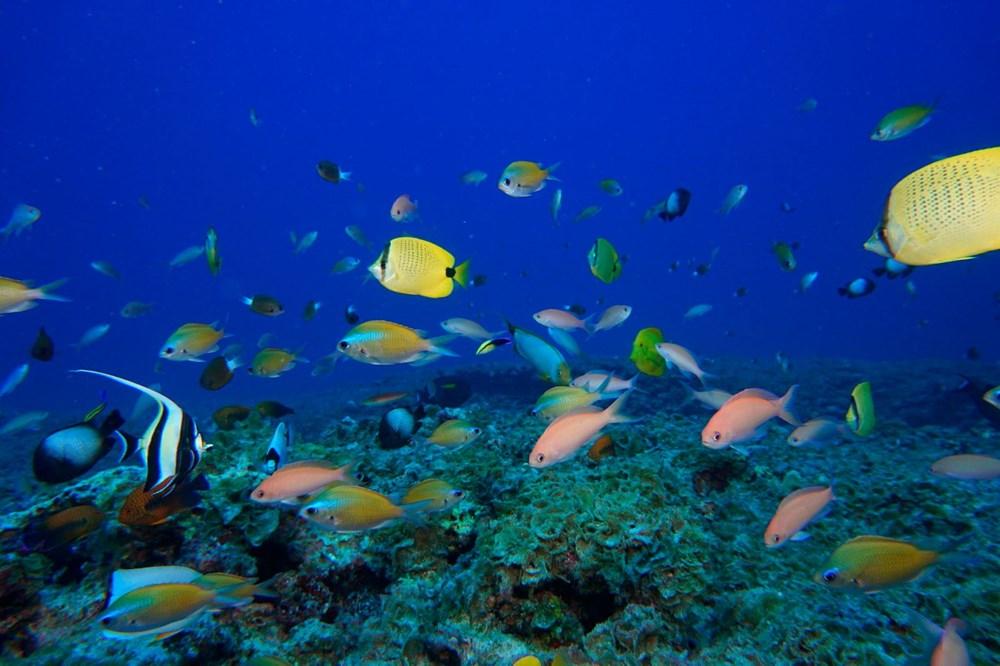 Küresel ısınma, deniz yaşamının kaynağı olan mercan resiflerini yok ediyor - 5