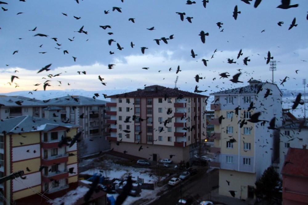 Şehir merkezini kargalar sardı (Korku filmi gibi) - 9