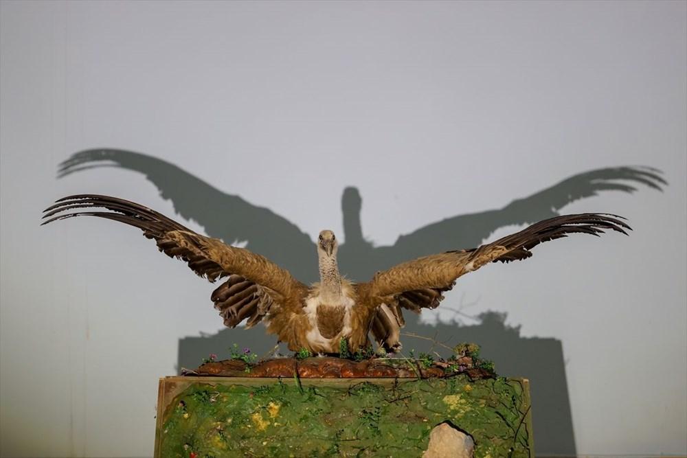 Van'da yaban hayvanları tahnit sanatıyla müzede tanıtılacak - 33