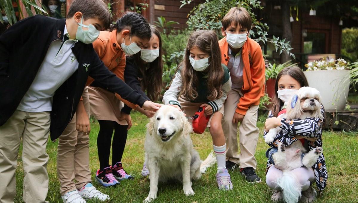 """""""Bir Kap Mutluluk"""" projesi ile ormanlara yuva yapmış sokak hayvanlarına yardım kampanyası"""