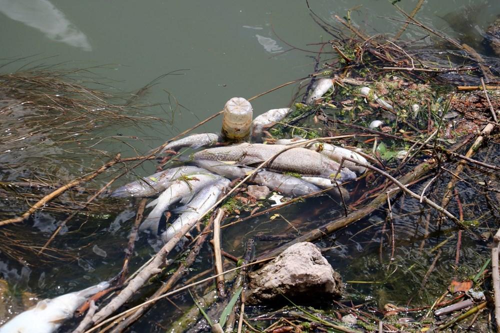 Türkiye'nin en uzun nehri Kızılırmak'ta toplu balık ölümleri - 2