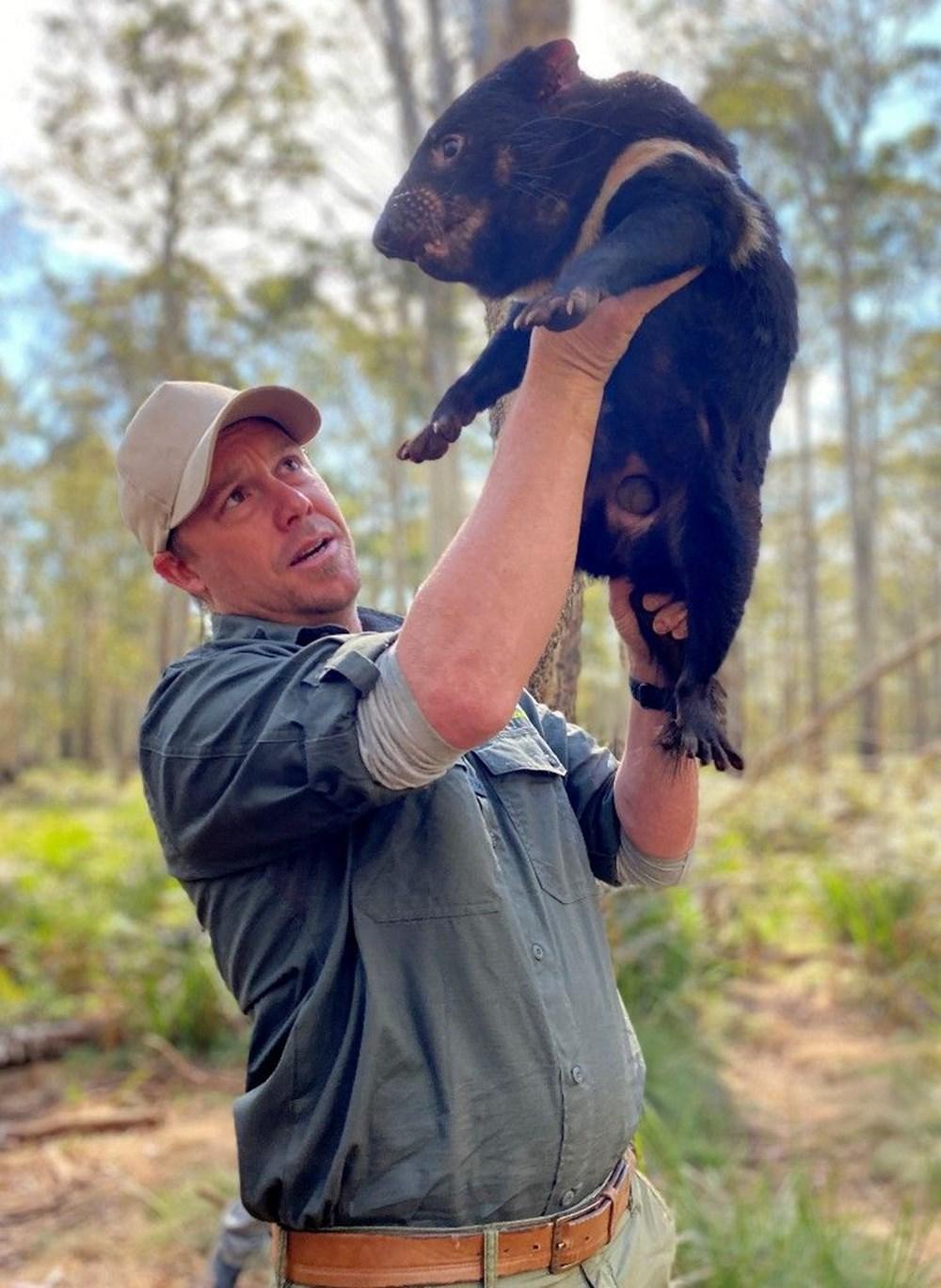 Tazmanya canavarı 3 bin yıl sonra Avustralya ana karasında doğdu: Yavru Joey dünyanın geleceğine dair umutları artırdı - 3