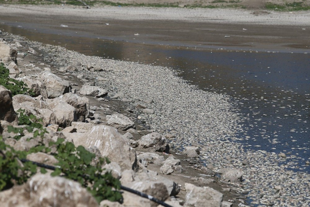 Bursa'da binlerce balık kıyıya vurdu - 2