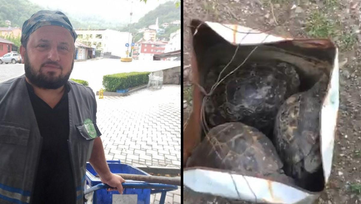 Çöpe atılan kaplumbağaları temizlik görevlisi kurtardı