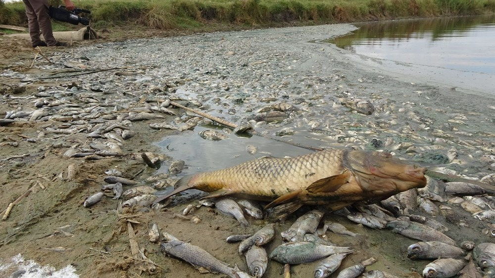 Gölette binlerce balık öldü: Kirleten işletmeye 96 bin lira ceza kesildi - 5