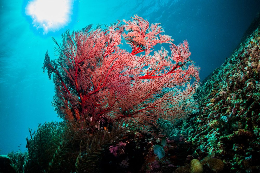 Büyük Set Resifi iklim değişikliği nedeniyle 2025'te yok olmaya başlayacak - 5